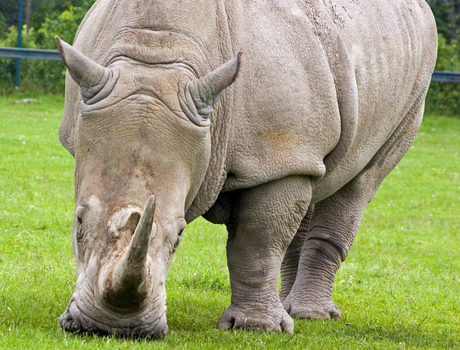 Irish man faces extradition for alleged rhino horn theft