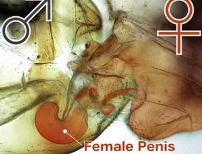 Science of the vagina