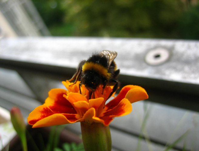 Sinn Féin calls for support in protecting the bees