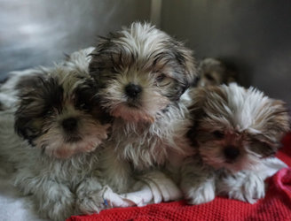 DSPCA calls for end to puppy farms