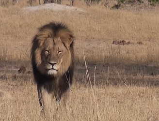"Mugabe condemns foreign ""vandals"" over Cecil the lion's death"