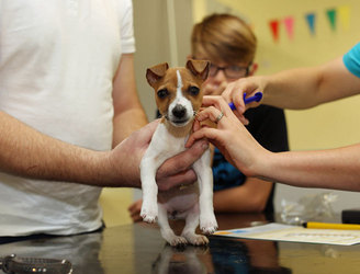 Want to get your dog microchipped? Do it for free next month