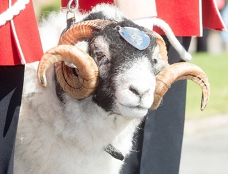 A sheep has been promoted to the rank of Lance Corporal in the British Army