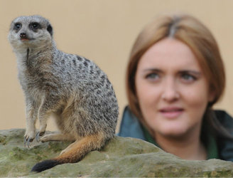 Meerkat-keeper in UK ordered to pay compensation after hitting monkey-keeper in face with glass