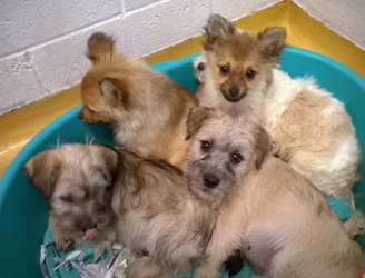 Some 18 puppies to be exported to the UK rescued at Dublin Port