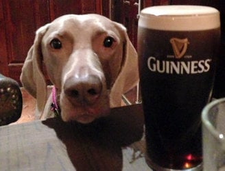 This Dublin pub has been told to turn away its four-legged regulars