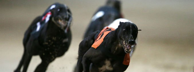 greyhound racing, sport, shelbourne park, harolds cross
