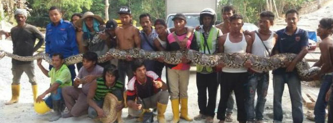 'Largest python in the world' dies in Malaysia