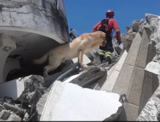 Heroic labrador passes away after saving seven people from the aftermath of Ecuador earthquake