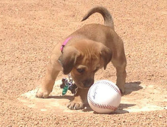 Abandoned puppy adopted by amateur baseball team in US state