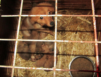 WATCH: ISPCA calls for action after BBC exposé on Irish puppy farm in Cavan