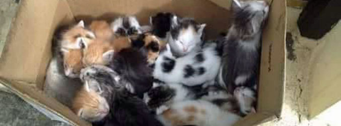 Kittens, Donegal, abandoned, box, Killybegs, Animals In Need, appeal, CCTV
