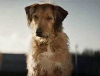 WATCH: New Dogs Trust ad to raise awareness of re-homing is just pawfect