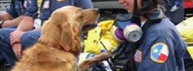 Last-known 9/11 rescue dog dies in US aged 16