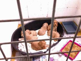 Man fined €4,000 for illegal export of puppies at Dublin Port