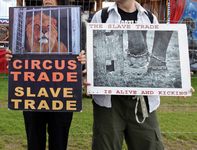 Wild animal circus, ban, Dublin City Council, welfare, DSPCA, Brian Gillen,