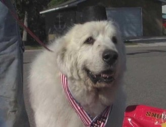 "WATCH: ""In dog we trust,"" says American town after re-electing canine mayor for third term"