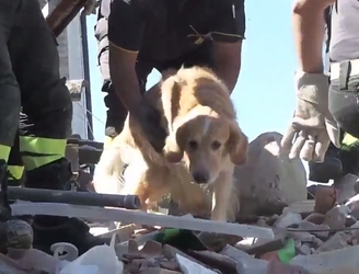WATCH: Dog rescued from rubble of Italian earthquake after nine days