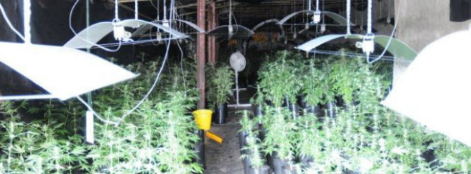 Cannabis worth €1.2m seized during major Garda operation in Co Tipperary