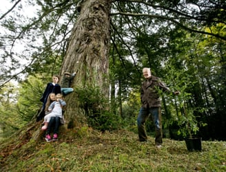 Offaly set for Ireland's first Giant Redwood forest since the ice age