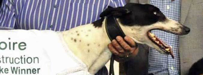 Gardaí appeal after greyhound valued at over €1m stolen in Tipperary