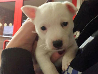 Recognise this guy? Puppy handed in to lost property at Dublin Airport