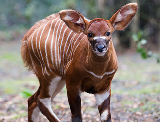 Dublin Zoo welcomes new arrival of endangered species