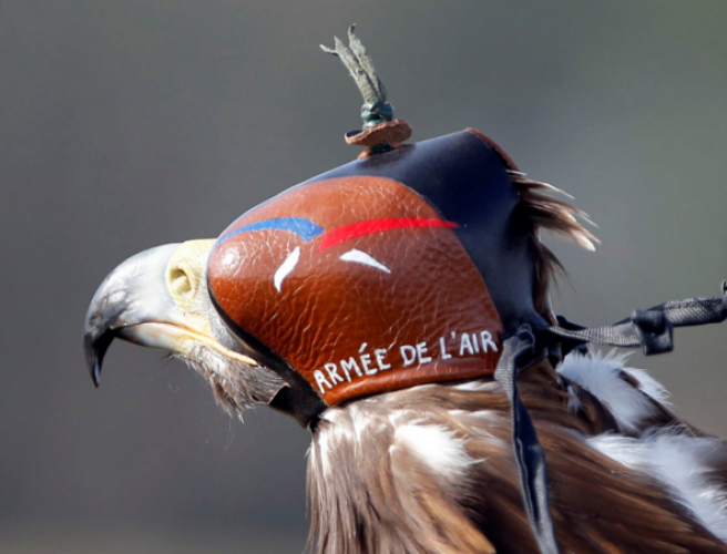 France to deploy eagles against drone threat