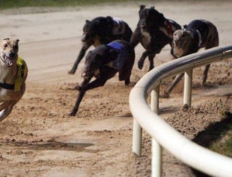 Concerns raised over future of greyhound industry