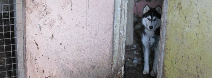 "ISPCA resources ""stretched to breaking point"""