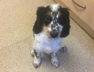 Appeal after puppy found drowned in bathtub