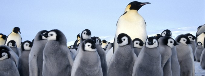 Report details climate change impact for World Penguin Day