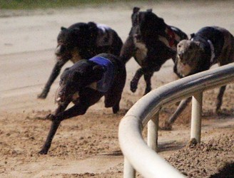 Department of Education set to acquire former greyhound stadium site