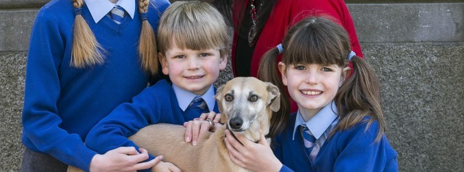 Should animal welfare be taught in Irish schools?