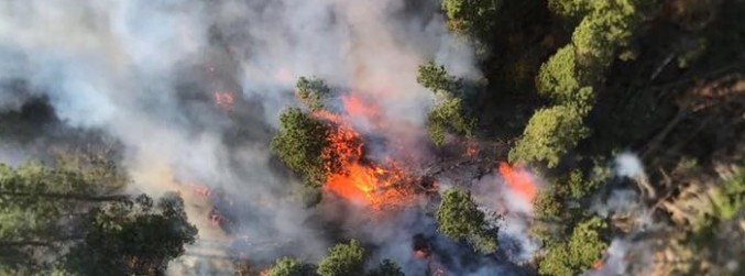Fire crews continuing to battle blaze in country's largest forest