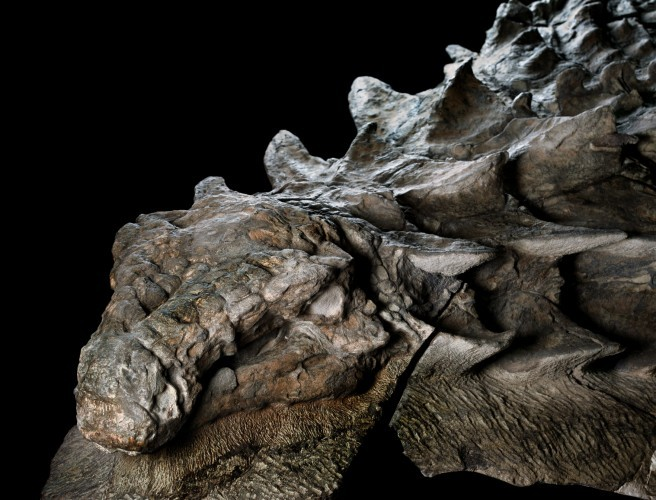 "Dinosaur fossil accidentally discovered is as ""rare as winning the lottery"""