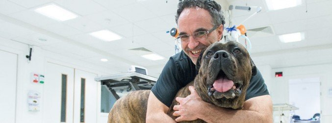 Irish 'Supervet' announces stem cell centre for pets