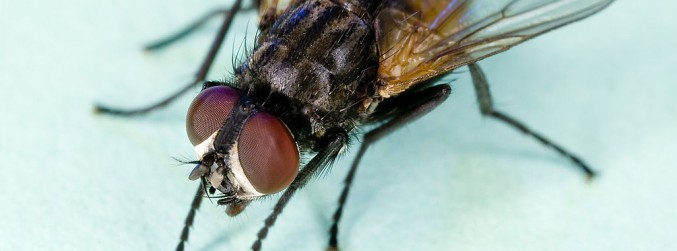Locals in Dublin 4 plagued by infestation of flies