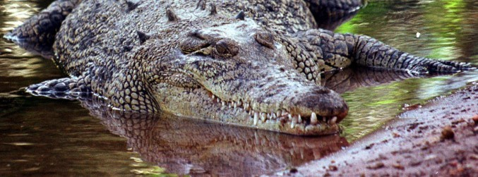 Human remains found inside crocodile in Australia after death of elderly woman