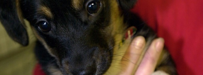 WATCH: People asked to Paws For Thought about a puppy this Christmas