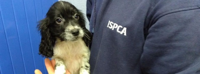 PICTURES: Seven puppies rescued after being smuggled from Ireland to the UK