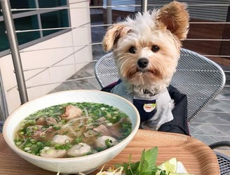 It's doggy date night as ban on pets in restaurants is lifted