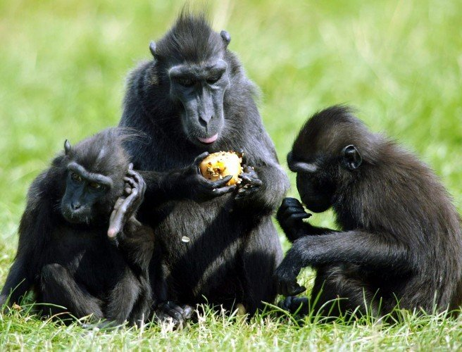 Dublin Zoo confirms three monkeys staged break-out during Storm Ophelia