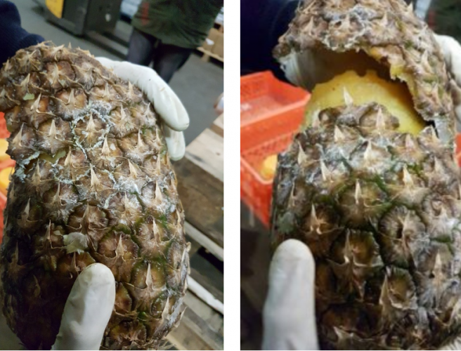Police have seized 745kg of Cocaine hidden in Pineapples!