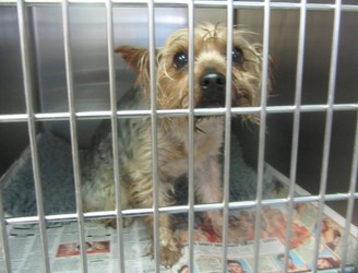 Little Yorkshire Terrier found zipped up in plastic bag in Longford