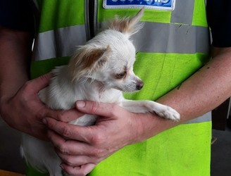 Three dogs taken into care after seizure at Dublin Port