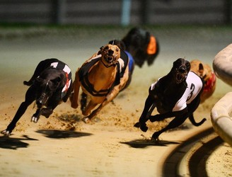 "Stop sending Irish greyhounds ""to die"" on Chinese racing track, activists urge"
