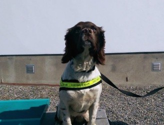 Detector dog Meg helps find over €1 million worth of cannabis at Dublin warehouse